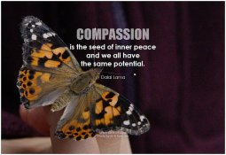 Reflections--Compassion--05