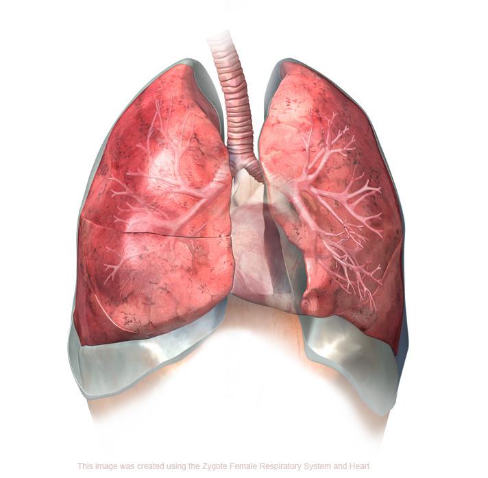 asthma reflection